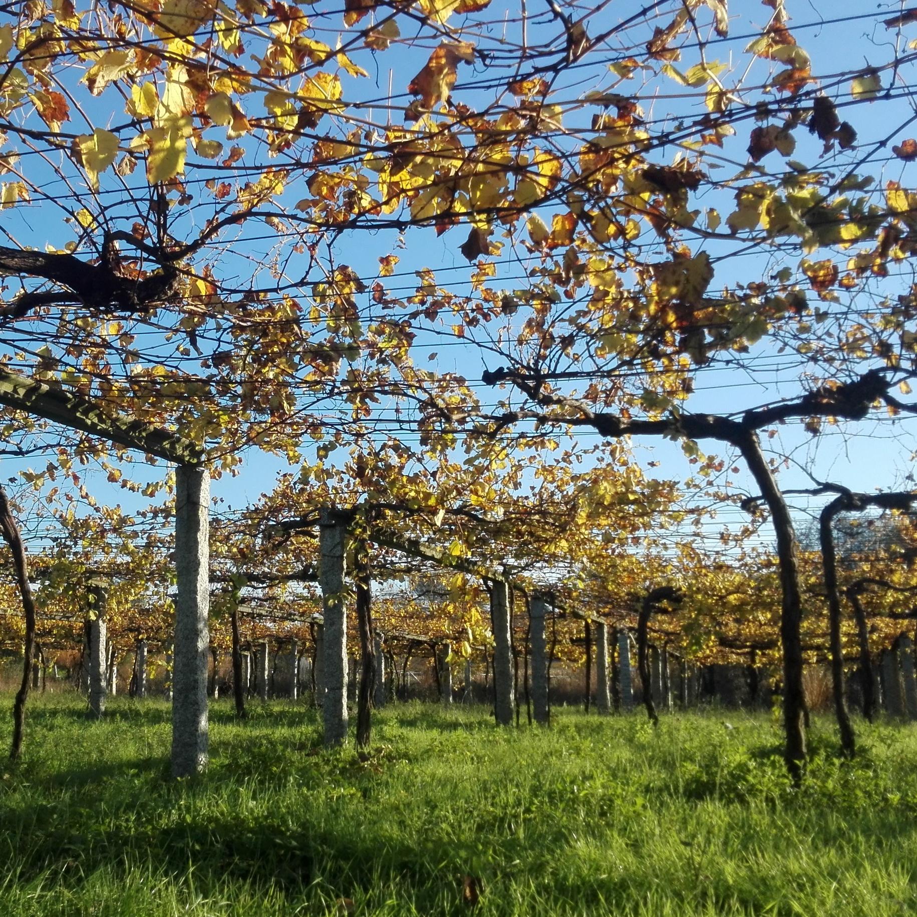 Eine Ode an den Albariño aus Galicien
